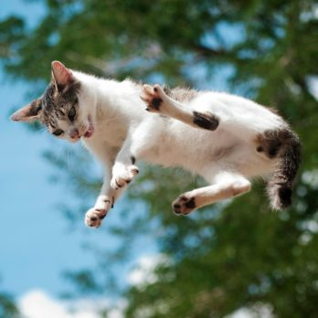 Do Cats Really Always Land on Their Feet?