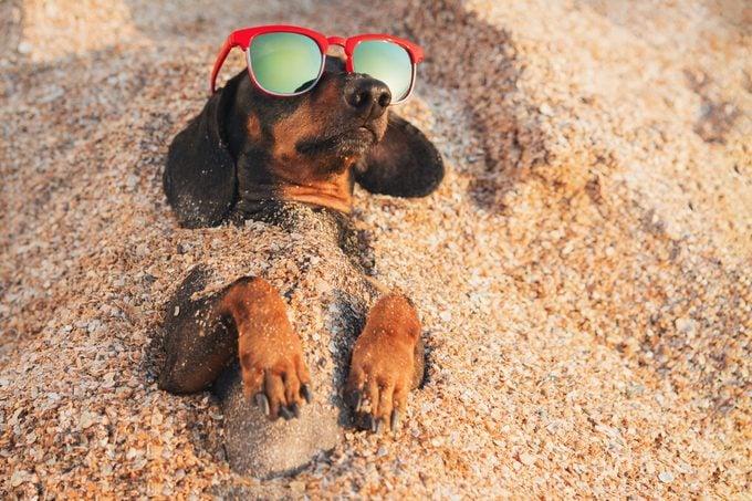 Beach puns instagram captions one liners dachschund dog