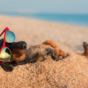Beach puns instagram captions one liners dachschund dog