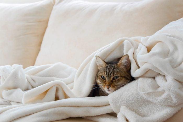 internal clock cat sleeping