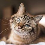 How Smart Is Your Cat? Here's How to Tell