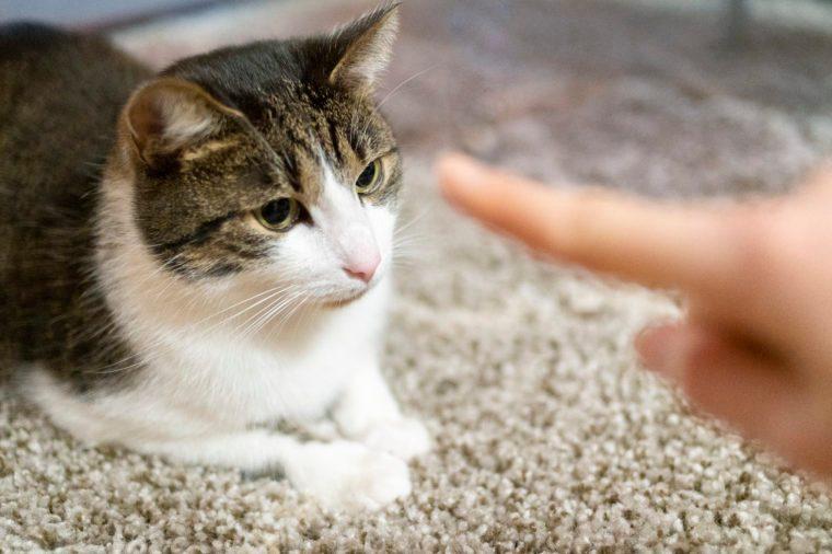 cat finger point