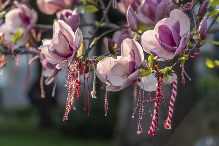 Martenitsa Martenitsi Bulgaria spring