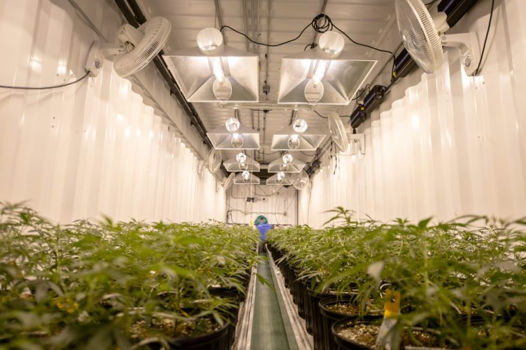 growing cannabis for a medical marijuana supplier