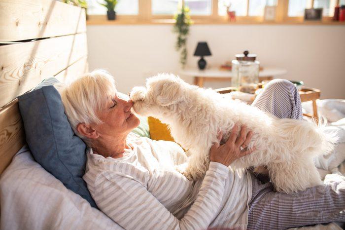 senior woman at home laying playing with maltese dog lap dog