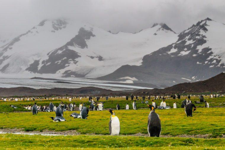 south georgia antarctica