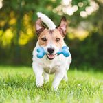 14 Gifts Your Dog Actually Wishes You'd Buy