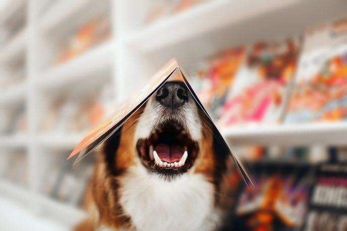 cute happy dog breed