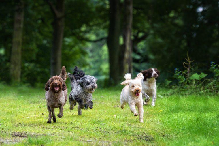 happy dogs running