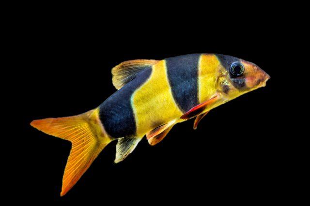 live fish TSA