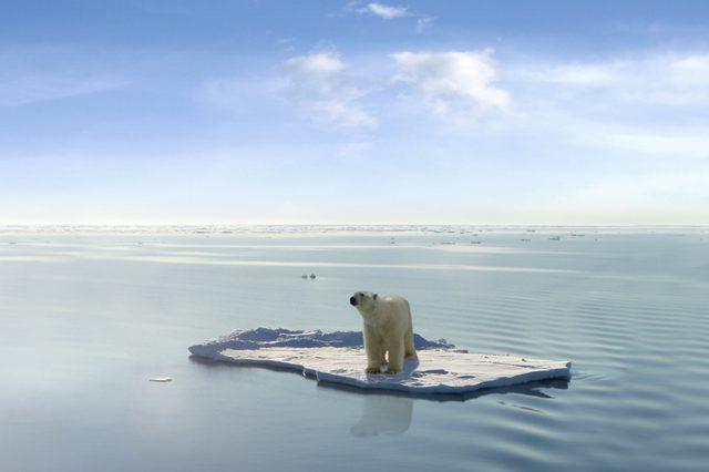 A polar bear on ice in the Arctic sea photoshop design