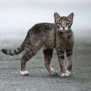 stray cat feral cat