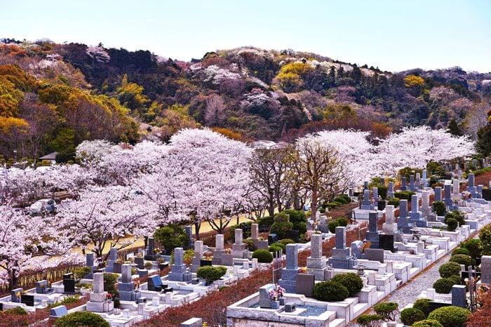 shunbun no hi japan spring celebration