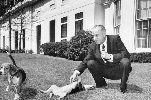 LBJ president dogs