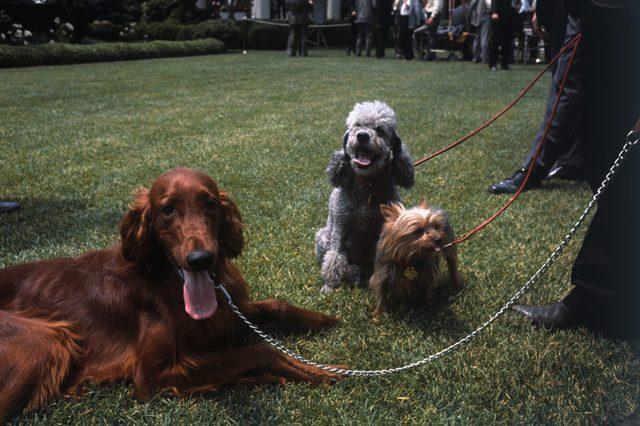 nixons dogs