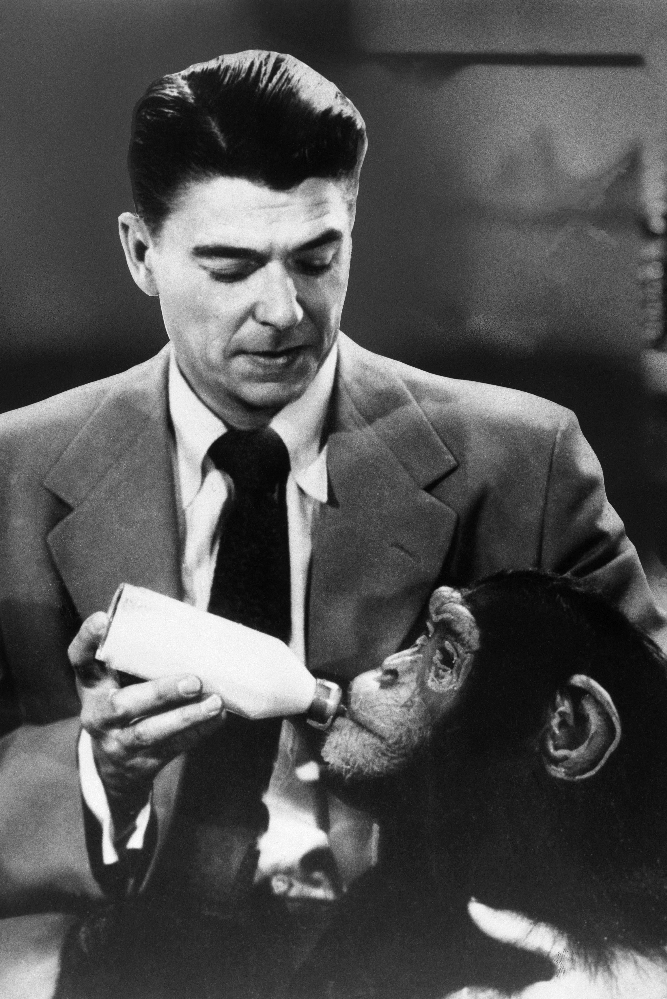 ronald reagan and chimp