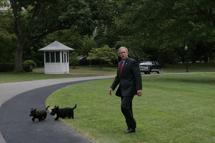 president bush dogs