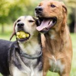 The Very Best Large Breed Dog Food