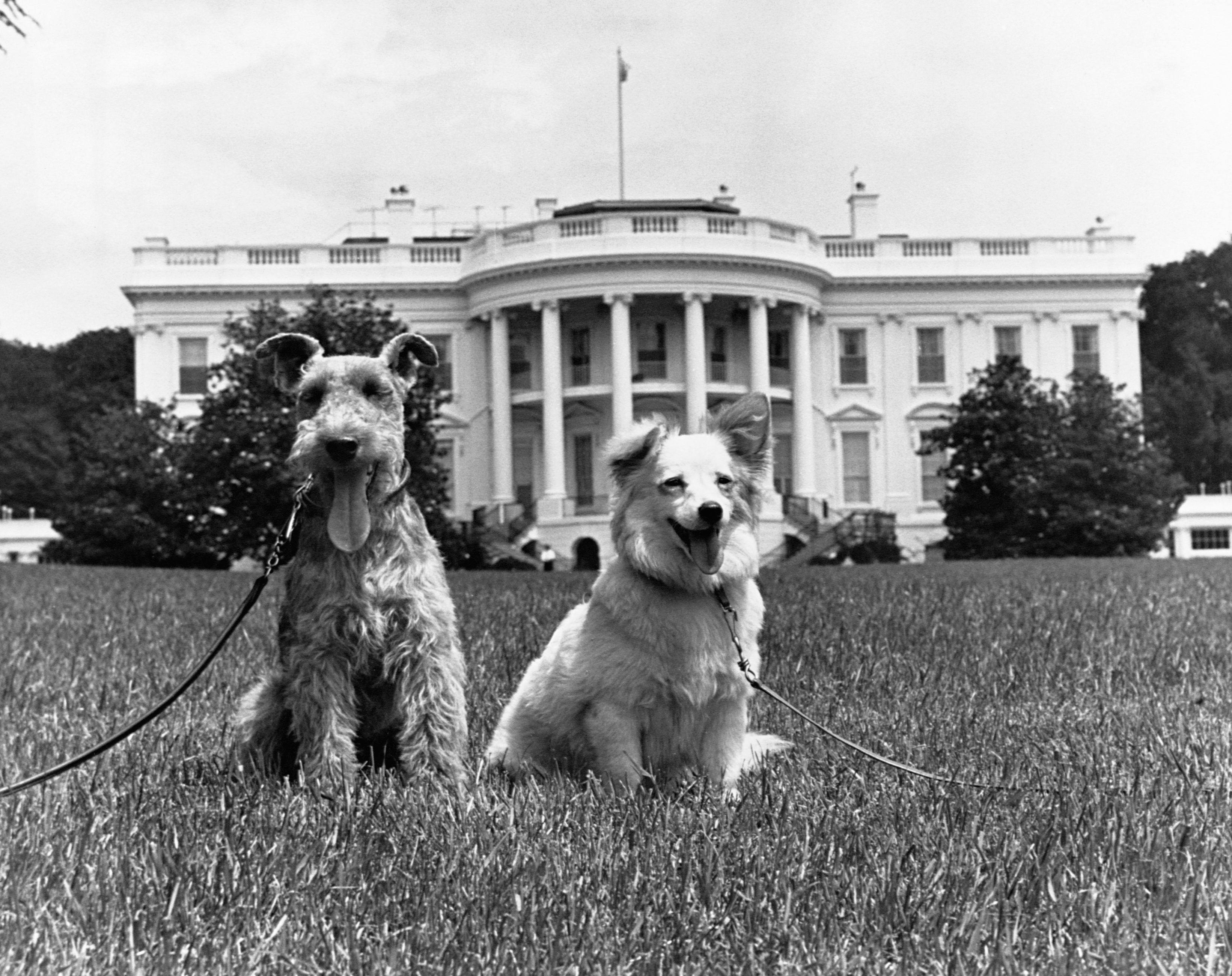 Can You Match the U.S. President with His Dog?