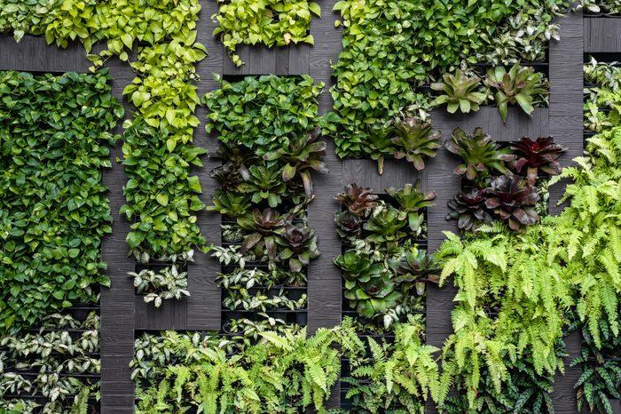 Green wall, eco friendly vertical garden