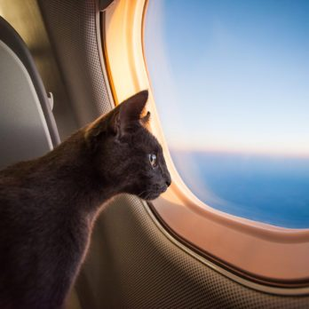 Delta Airlines Just Made It So Much Easier to Fly with Your Pets