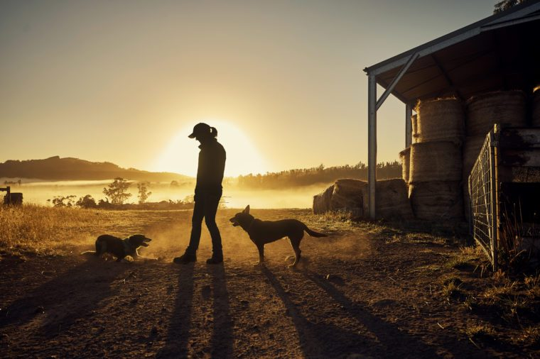 woman silhouette with her dogs on a farm