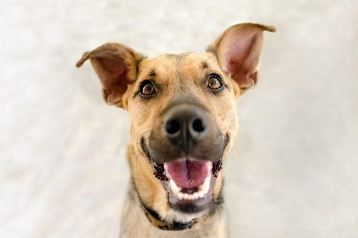 happy dog dos