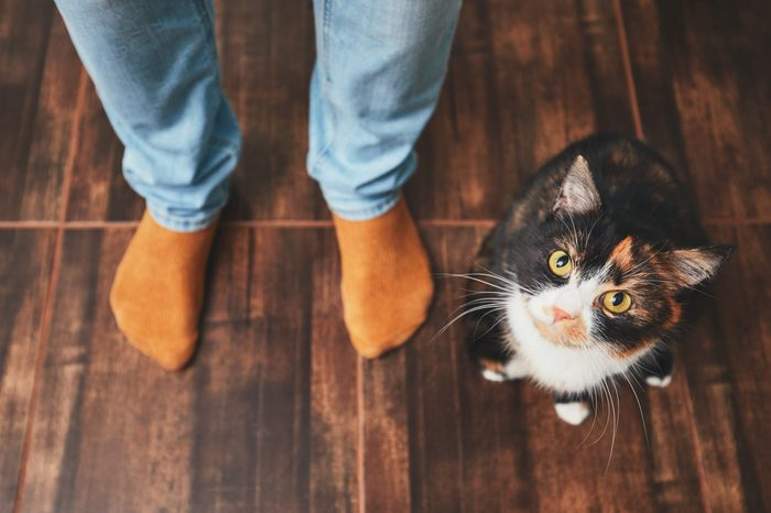 smart cat owner test