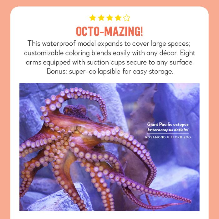 hilarious product reviews animal giant pacific octopus