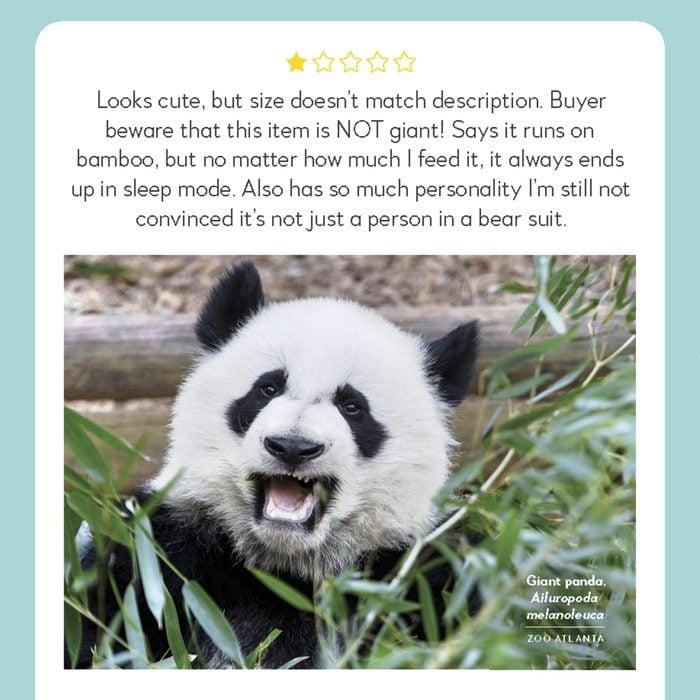 hilarious product reviews animal giant panda