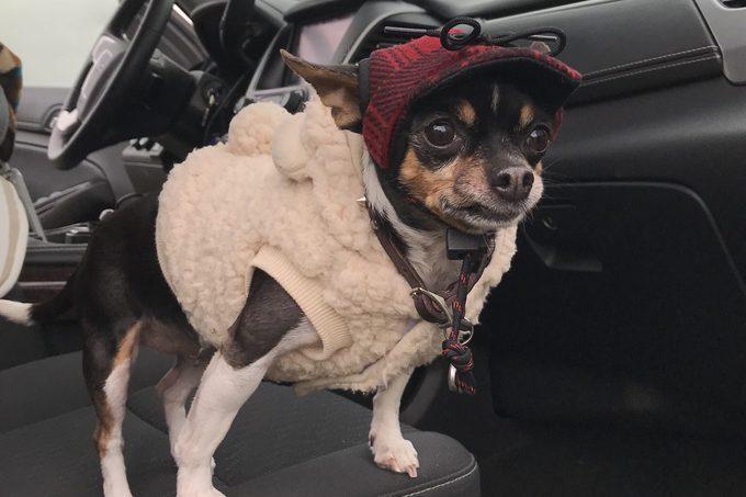 Summer Hutchinson koko dog saved relationship