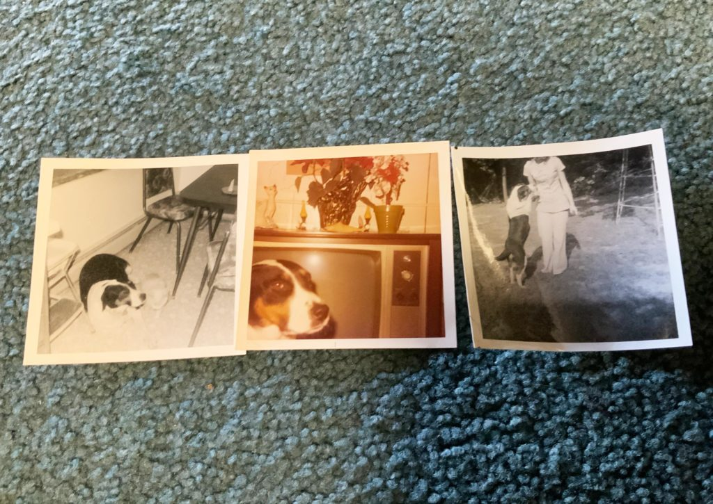 photos of nell the dog. carpet background.