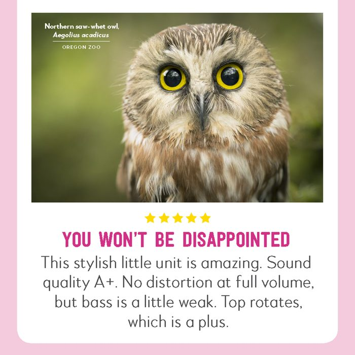 hilarious product reviews animal northern saw whet owl
