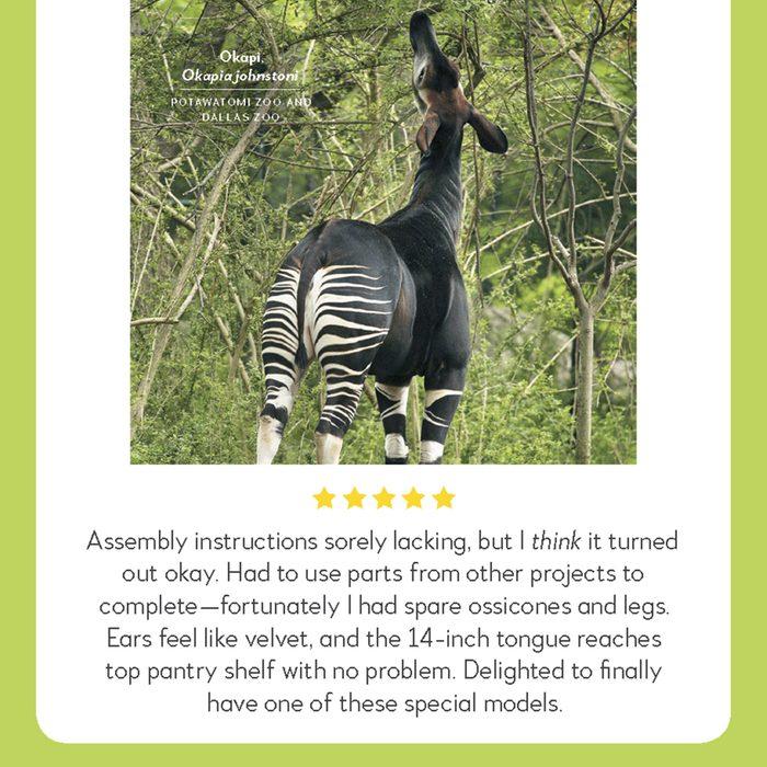 okapi hilarious product reviews animal