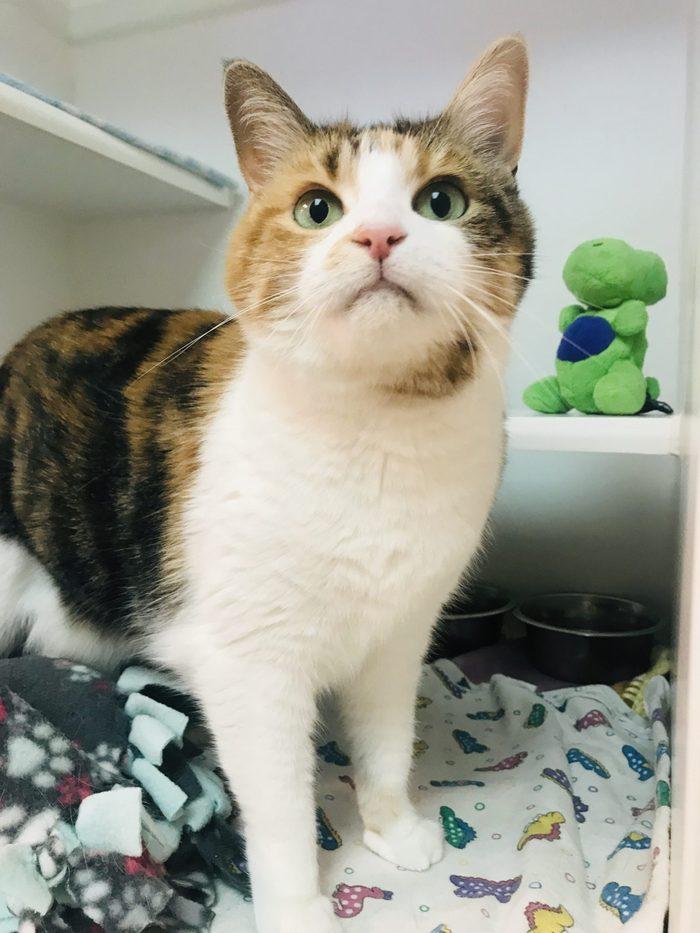 piper cat