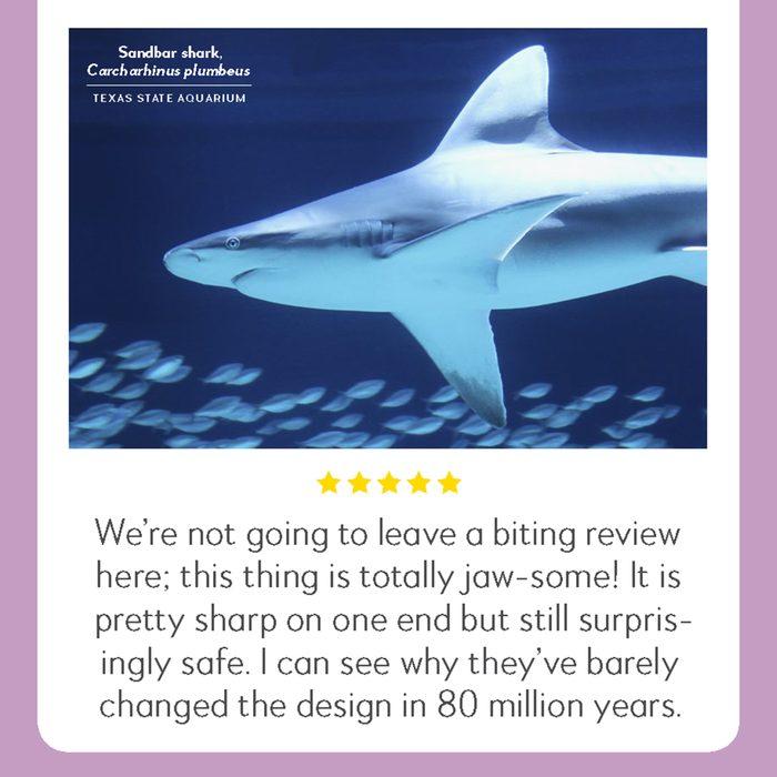 sandbar shark hilarious product reviews animal
