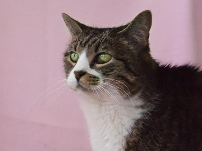 sweet pea cat