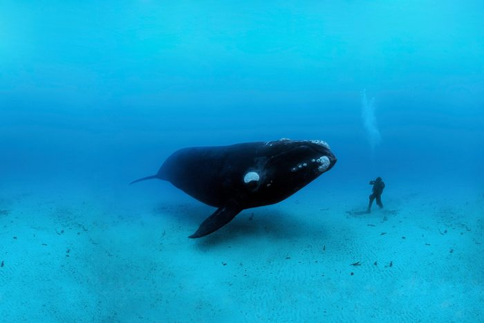 Brian Skerry photo