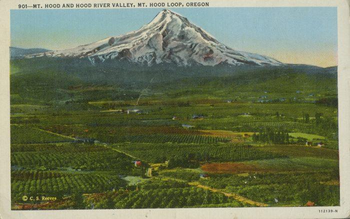 vintage post card mt hood oregon
