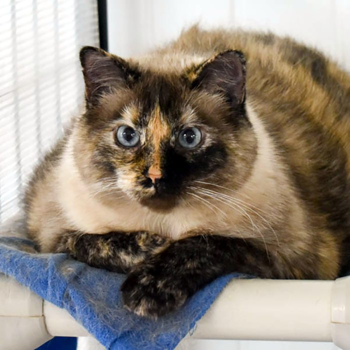 annie shelter cat