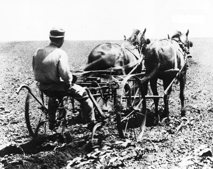Harry Truman drives a horse-drawn cultivator on the family's Grandview farm