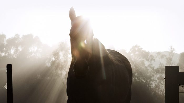 silhouette of a horse with rays of sunshine coming from behind him
