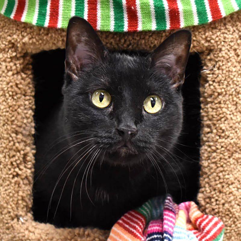 sketcher shelter cat