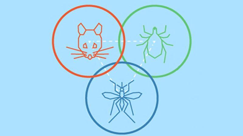 National Pest Management Association vector sectors pest watchlist infographic