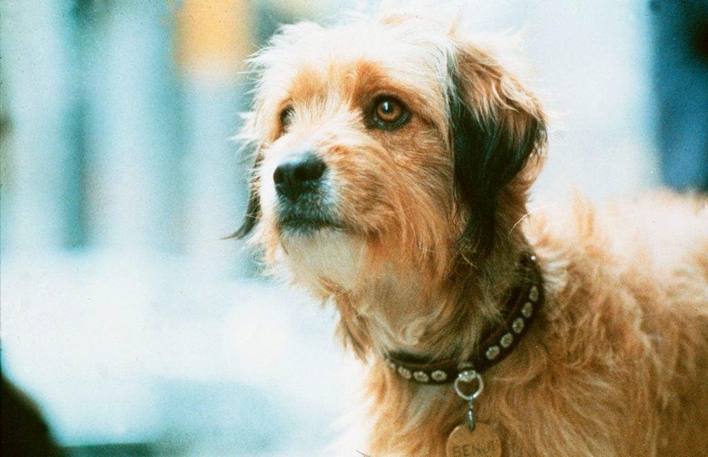 benji dog movie still