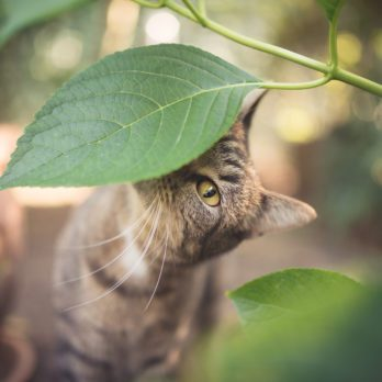 9 Common Houseplants Every Cat Owner Should Avoid