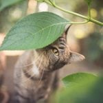 20 Plants That Are Poisonous for Cats