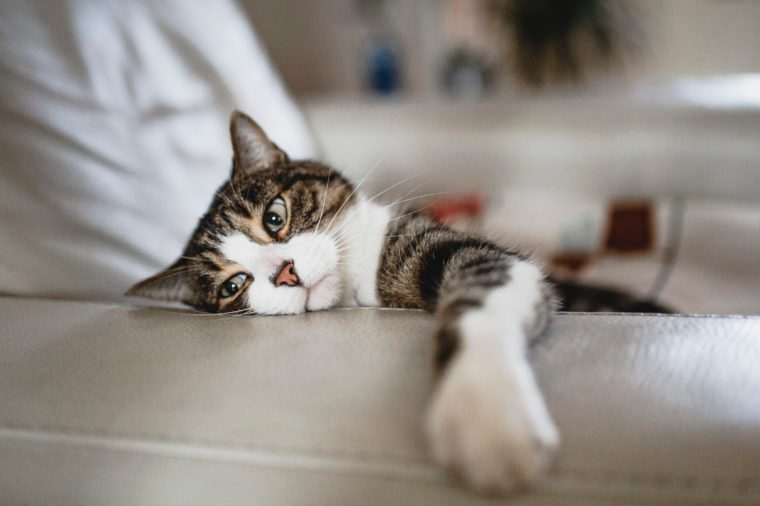 Tired cat on an armchair