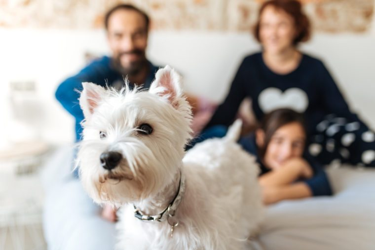 Couple relaxed at home in bed with their little daughter and the dog
