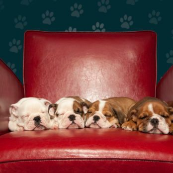 See the 15 Cutest Photos of Puppies Sleeping